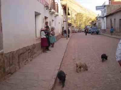 pigs-in-town.jpg